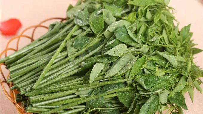 白癜风患者究竟如何选择吃野菜.jpg